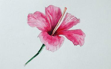 Hibiscus (Sold)